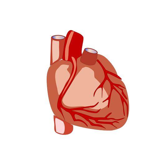 Anatomie en Fysiologie van het Hart